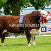 Native inter-breed champion, Moralee 1 Rebel Kicks from Tom and Dy Harrison, Northumberland