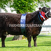 Reserve native inter-breed champion Blackcraig Dora May from John and Anne Finlay, Castle Douglas