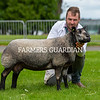 Blue Texel champion from Kevin Watret