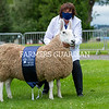 Border Leicester champion from Mary Laidlaw