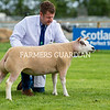 Beltex champion from Alan and Ellie Miller