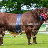Beef Shorthorn champion, Dunsyre Horatio from Headlind Partners, Lanarkshire.