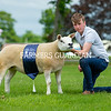 Texel and reserve inter-breed champion from Robbie Wilson