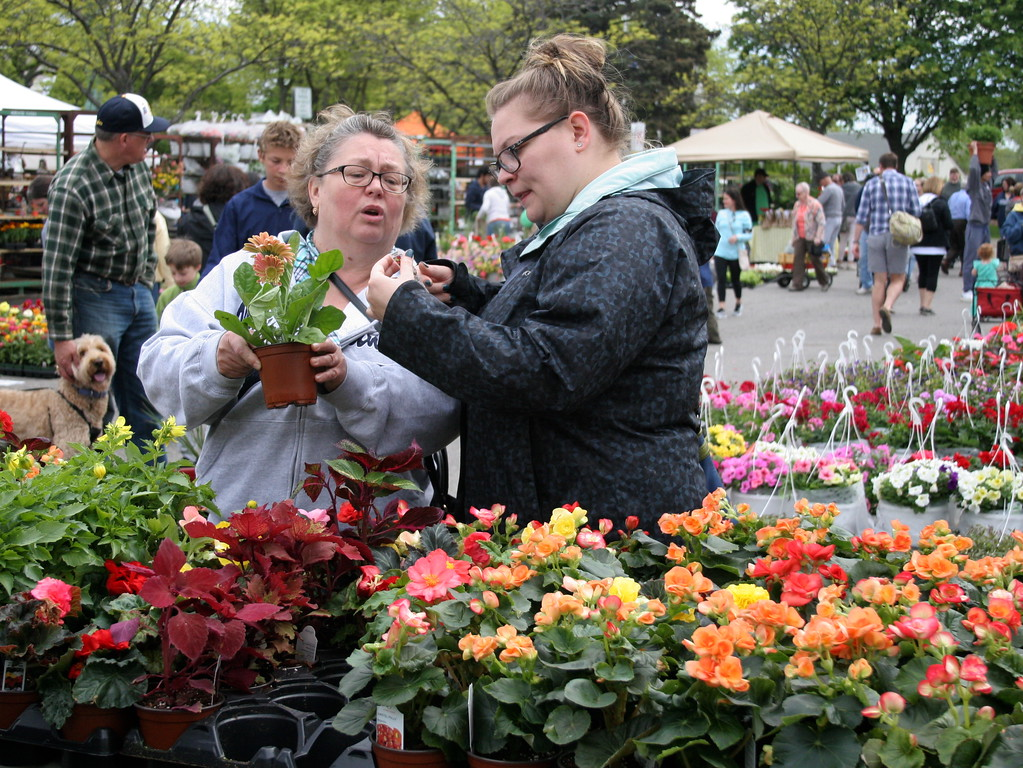 . Visitors browse a wide selection of zinnias, geraniums, begonias, and other flowers and plants at Sunday\'s 24th Annual Royal Oak in Bloom festival in Royal Oak, Michigan on May 14, 2017.  Over 65 vendors offered hanging baskets, plants, vegetables, perennials, annuals, and garden accessories for sale to families shopping this annual Mother\'s Day event hosted by the Royal Oak Chamber of Commerce. (Photo by: Brandy Baker)