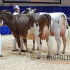 RAWF15-Ayrshire-ADSCN9984