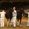 Royal15_Holstein_1E6A7984