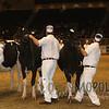 Royal15_Holstein_1E6A7986