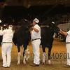 Royal15_Holstein_1E6A7985