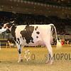 Royal15_Holstein_1E6A8294