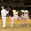 Royal15_Holstein_1E6A8296