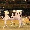 Royal15_Holstein_1E6A8300