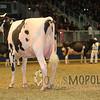 Royal15_Holstein_1E6A8301
