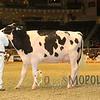 Royal15_Holstein_1E6A8298