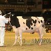 Royal15_Holstein_1E6A8297