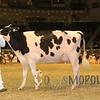 Royal15_Holstein_1E6A8299