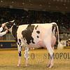 Royal15_Holstein_1E6A8295