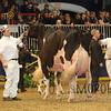 Royal15_Holstein_1E6A9036
