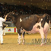 Royal15_Holstein_1E6A9034