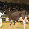 Royal15_Holstein_1E6A9037