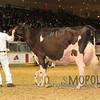 Royal15_Holstein_1E6A9033