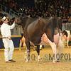 Royal15_Holstein_1E6A9039