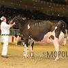 Royal15_Holstein_1E6A9031