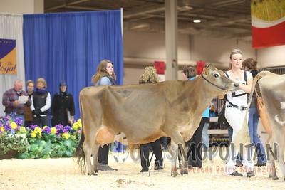 Royal Jersey Senior Cows 2015