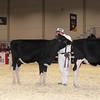 Royal16_Holstein_1M9A9690