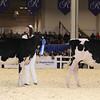 Royal16_Holstein_1M9A9678