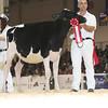 Royal16_Holstein_L32A3712