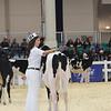 Royal16_Holstein_L32A3616