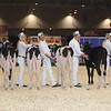 Royal16_Holstein_1M9A9527
