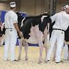 Royal16_Holstein_L32A3750