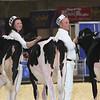 Royal16_Holstein_L32A3671