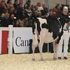 Royal16_Holstein_L32A3726