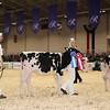 Royal16_Holstein_1M9A9560
