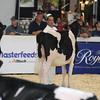 Royal16_Holstein_L32A3742