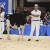 Royal16_Holstein_L32A3683
