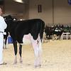 Royal16_Holstein_L32A3639