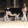 Royal16_Holstein_1M9A9673