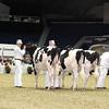 Royal16_Holstein_L32A3819