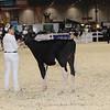 Royal16_Holstein_1M9A9493