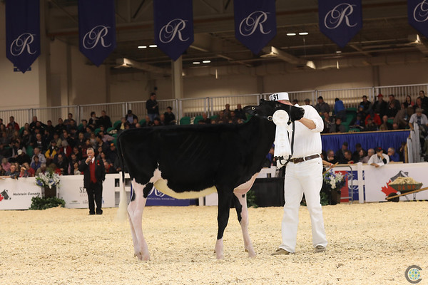 Royal16_Holstein_1M9A9676