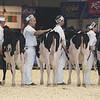 Royal16_Holstein_L32A3748