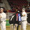 Royal16_Holstein_1M9A9893