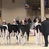 Royal16_Holstein_1M9A9650