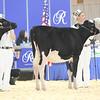 Royal16_Holstein_L32A3626