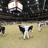Royal16_Holstein_1M9A9812