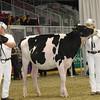 Royal16_Holstein_1M9A9874