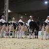 Royal16_Holstein_1M9A9531